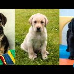 Competition – Name a guide dog puppy